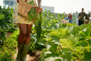 Urban agriculture could help cities meet sustainability goals